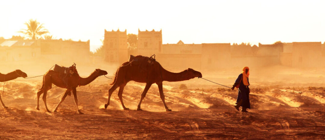 Top 10 reasons to trek the Sahara Desert