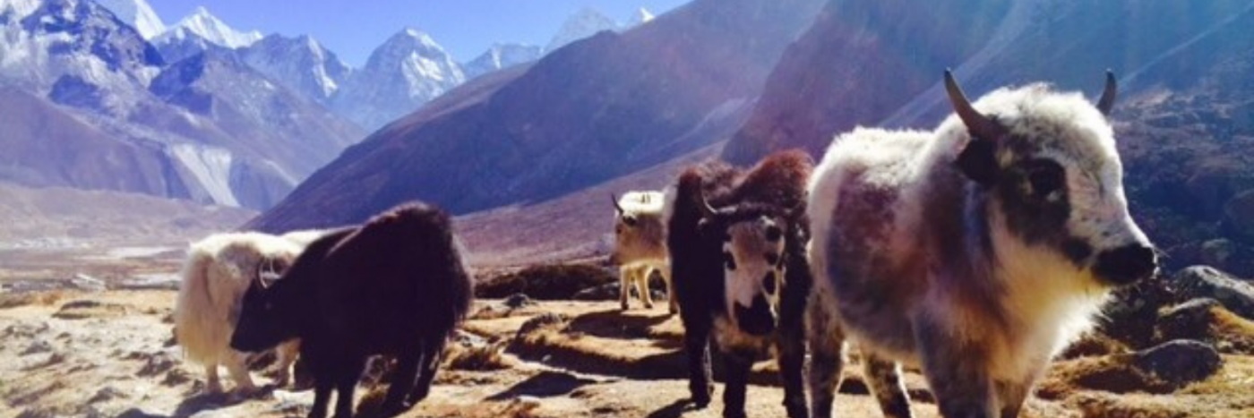 Trek Everest | Nepal Trekking