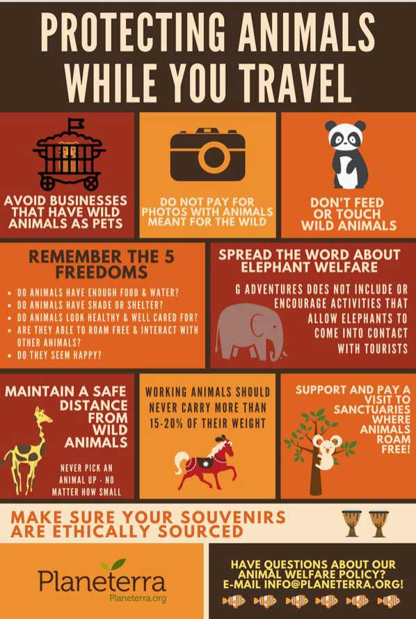 Protecting animals while you travel